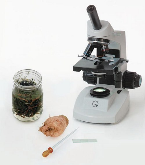 Examination with a microscope